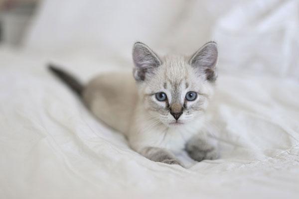 la-la-lovely-kitty