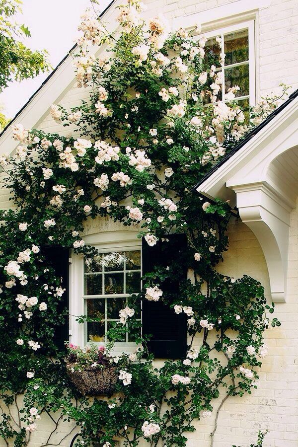 rose covered house