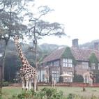 la la loving / giraffe manor