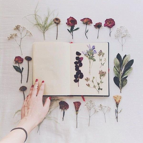 pressed-flowers_la-la-lovely