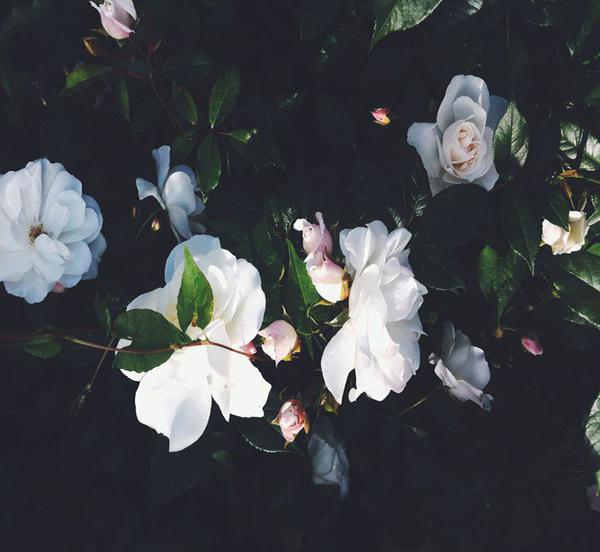 la la loving blooms